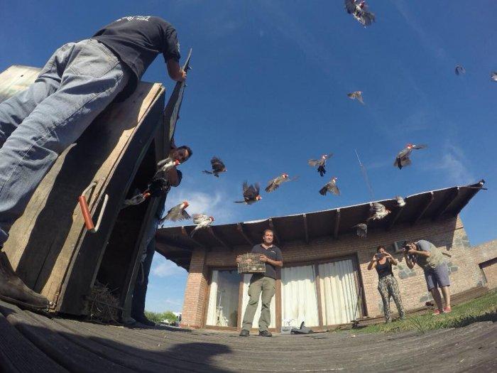 Liberaron aves autóctonas en Miramar